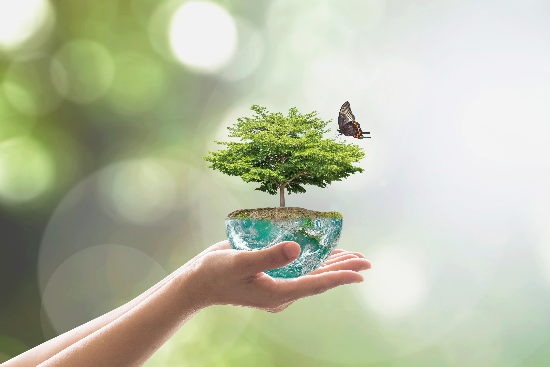 Preform arbeitet mit umweltfreundlichen Rohstoffen, um hochwertige Absorber herzustellen